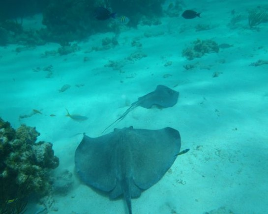 Snorkeling & Stingray City